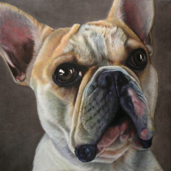 French_Bulldog_Buddy